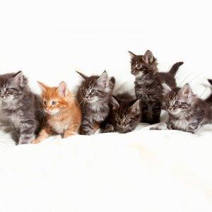 Lemmikkikuva, kissakuvaus